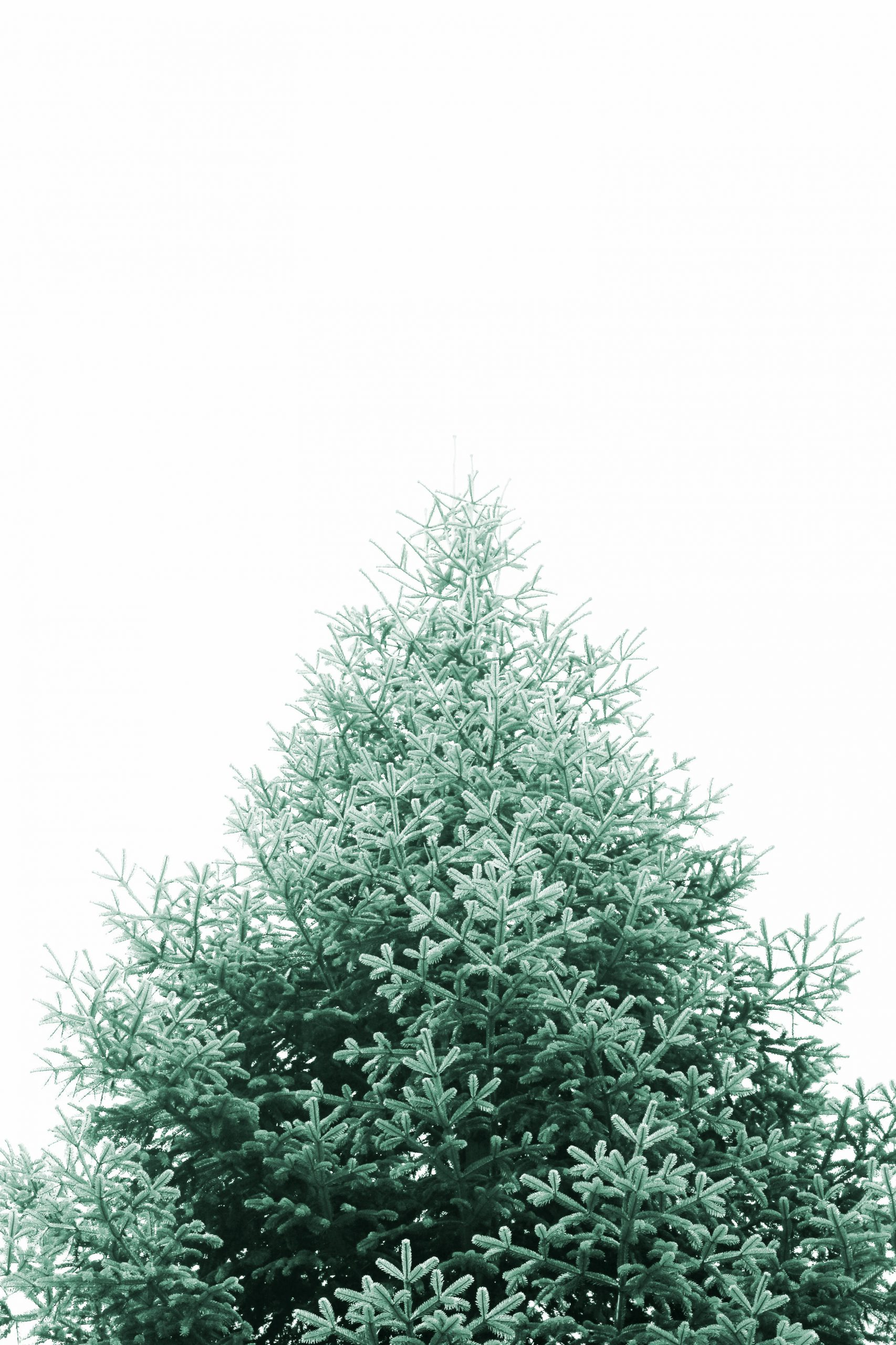 Christmas For All Pickup 2020 Used Christmas Tree Pick up 2020 – Berlin&friends